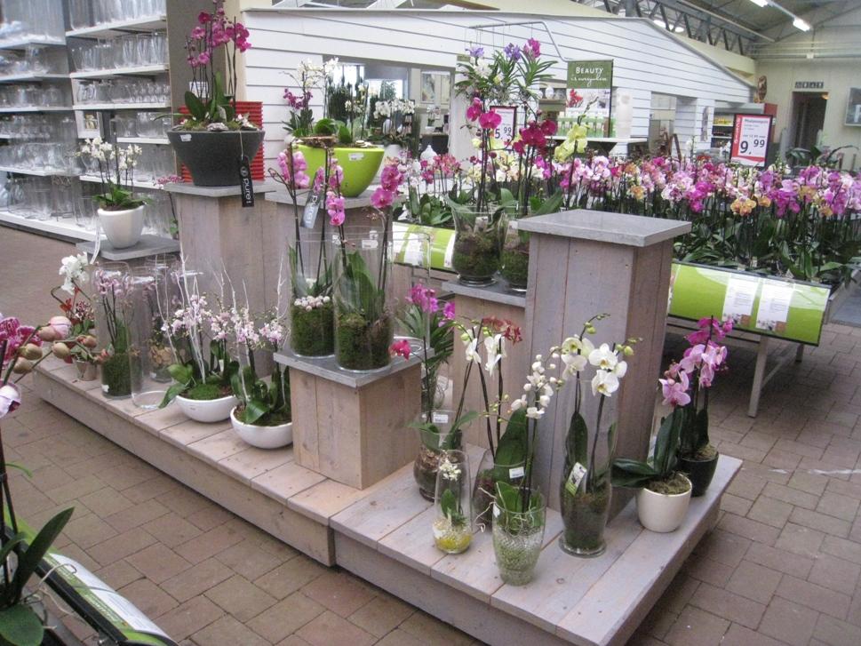 erneuerte orchideen abteilung nachrichten tuincentrum dani ls. Black Bedroom Furniture Sets. Home Design Ideas