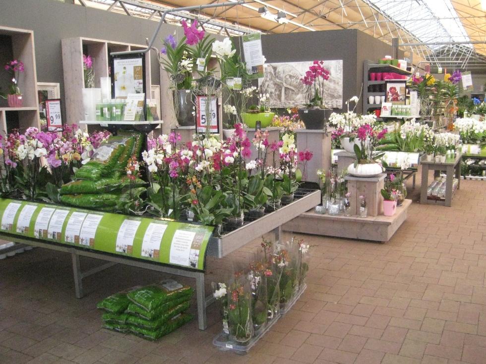 Erneuerte Orchideen Abteilung