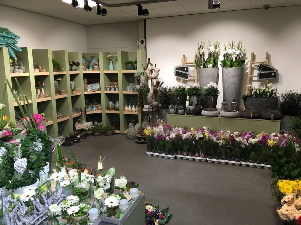 Ook kamerplanten in onze bloemenwinkel nabij Roermond