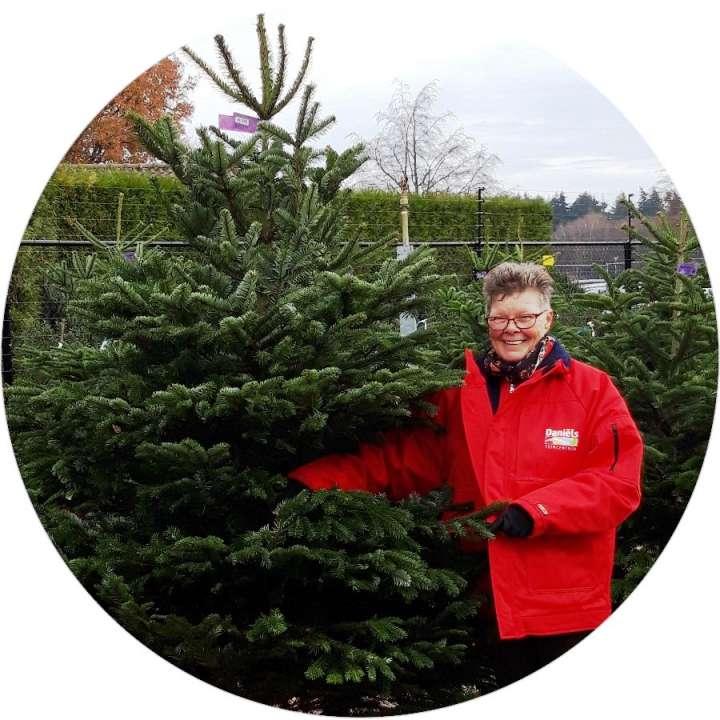 Echte Kerstbomen Tuincentrum Daniels
