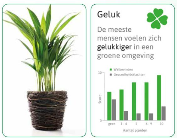 Plant Slaapkamer : Planten maken gelukkiger! - Nieuws - Tuincentrum ...