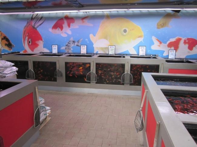 Voor al uw vijvervissen komt u naar Tuincentrum Daniëls in Limburg