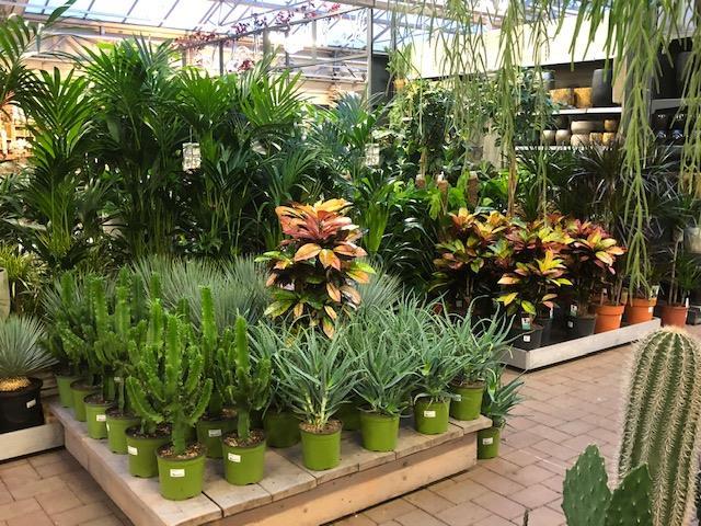 Veel groen bij Tuincentrum Daniëls in Limburg