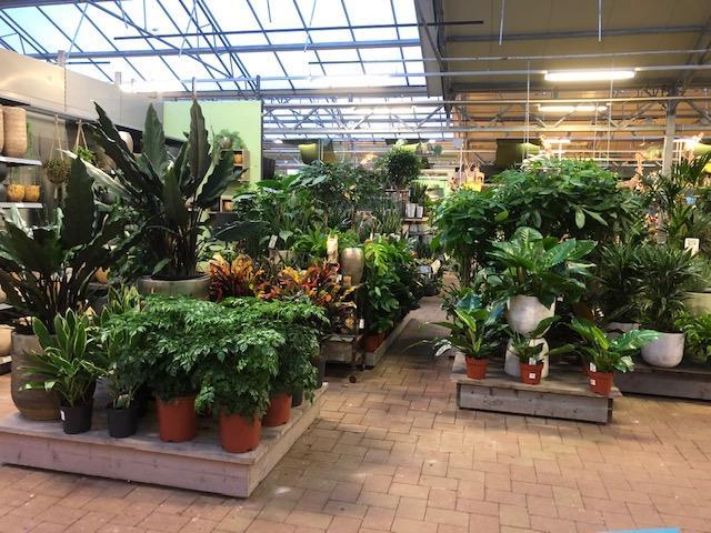 Altijd verse planten bij Tuincentrum Daniëls in Vlodrop