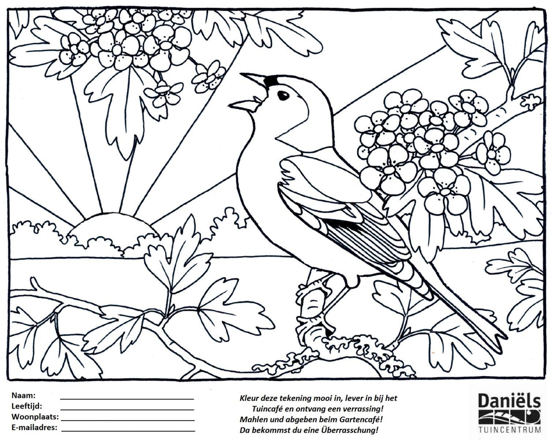 Kleurplaten Dieren Vogels.Kleurplaat Week Van De Vogels Tuincentrum Daniels